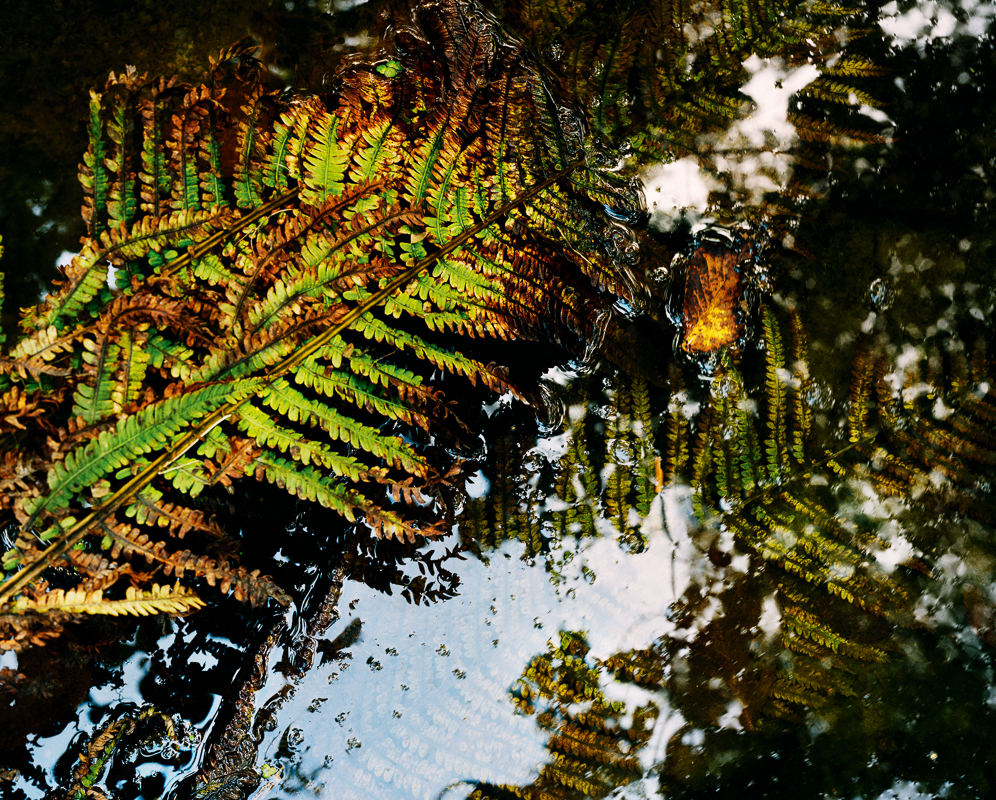 Bracken leaves in water from Alna by Bjørnar Øvrebø